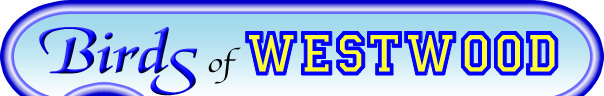 Birds of Westwood Logo